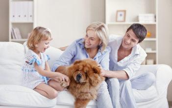 Hund i hjemmet